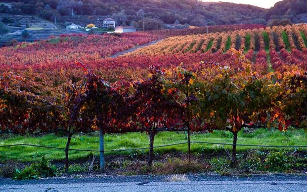 Best Tips for Your First Wine Visit