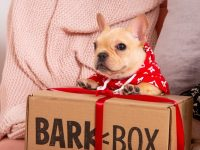 Top 8 Gifts for Dog Lovers In 2020 and Byond