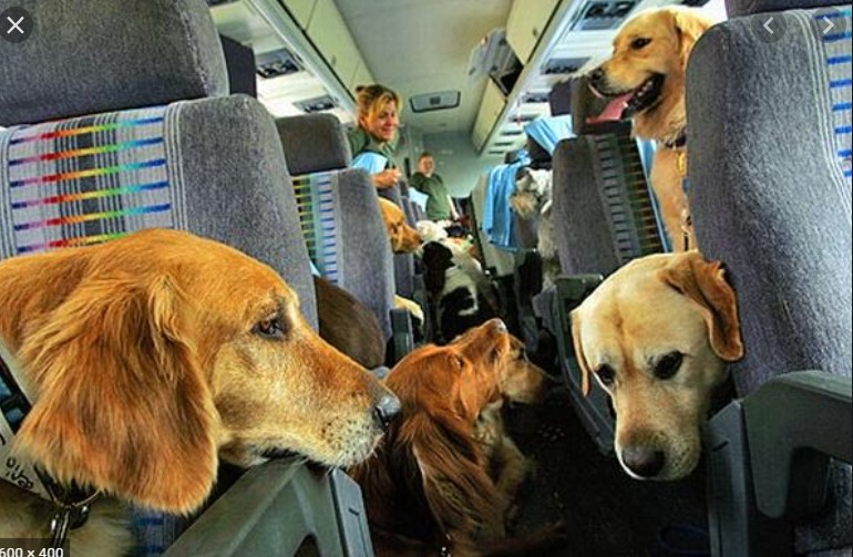 Can You Bring Puppies on A Plane